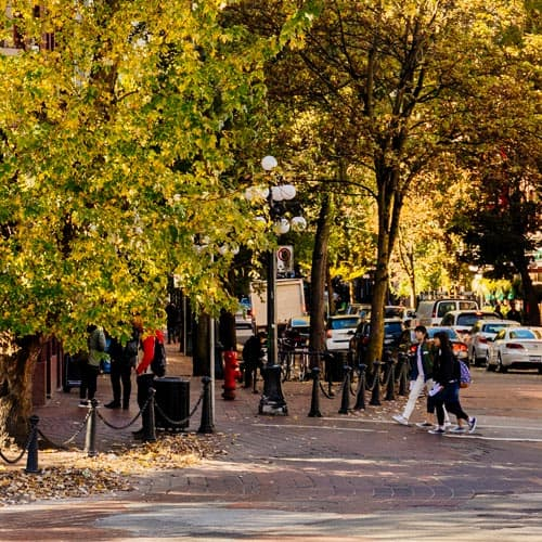 Vancouver-Maple-Tree-Square-Arboles
