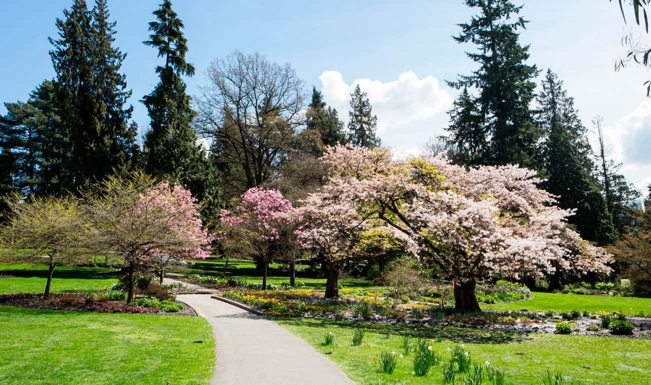 primavera en vancouver